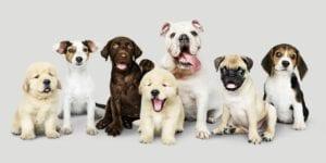 תוחלת חיים של כלבים
