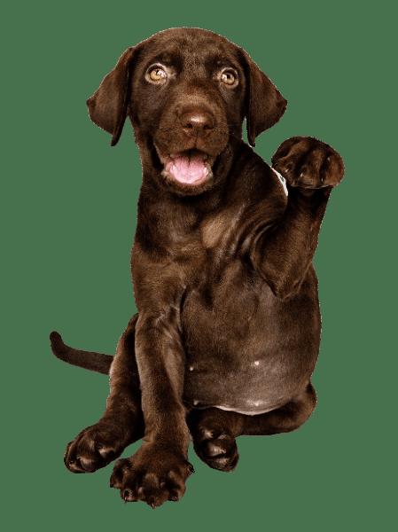 בית קברות לכלבים מחיר